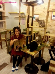 At the infamous cat cafes of Seoul.