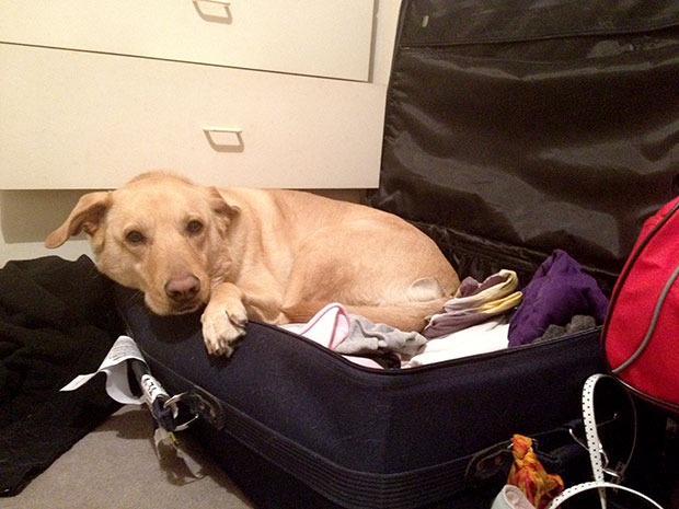 Lunchi in my suitcase don't want me to leave..