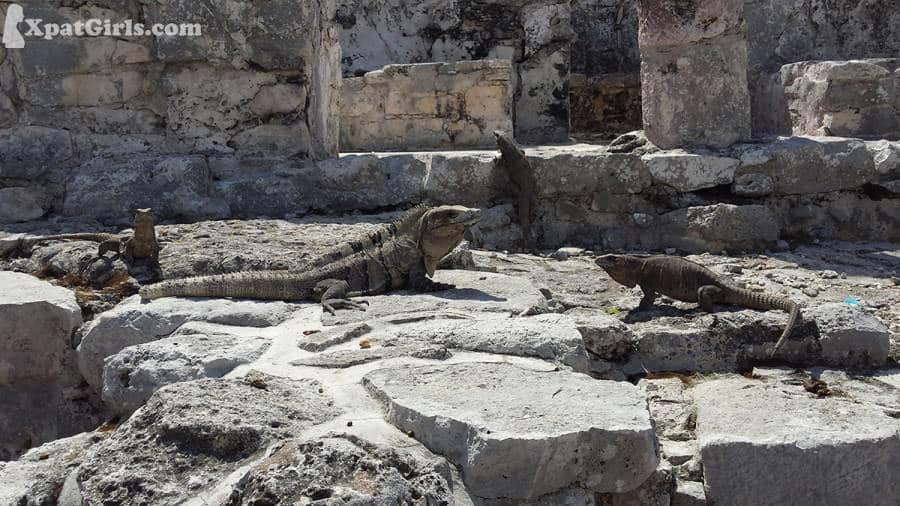 I want an iguanaaaaaa