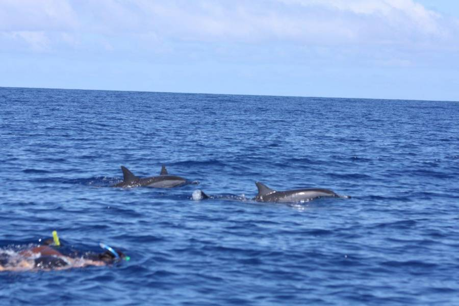 In Mauritius I volunteered with a marine conservation organization where I had to monitor dolphin populations and often had the opportunity to swim with them.