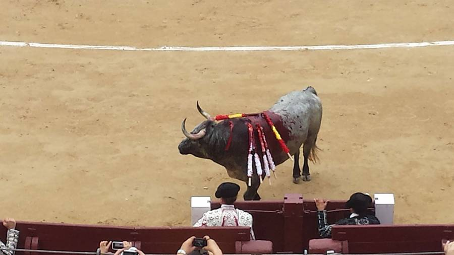 Bull stabbing