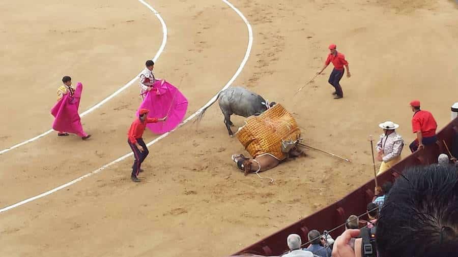 Horse down